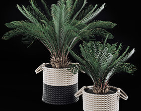3D model plant Palms in baskets