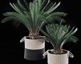 3D model plant Palms in baskets