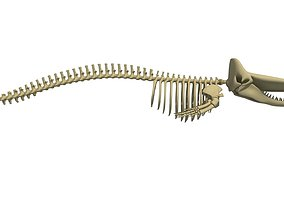 3D model Sperm Whale Skeleton