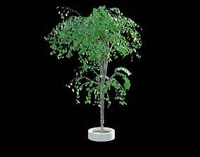 3D asset Tree 1