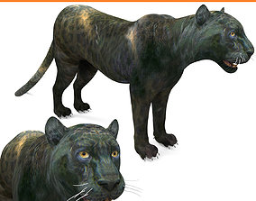 Panther 3D Models game ready low poly model low-poly