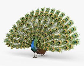 3D Peacock HD