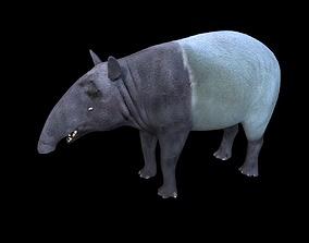 3D asset Asian Tapir Rigged