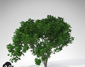 3D XfrogPlants Fig Tree