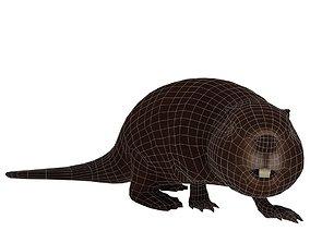 Beaver001 3D model