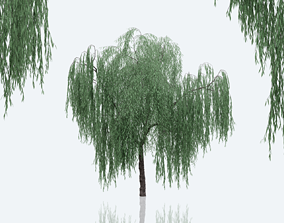 Weeping Willow 3D