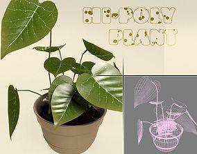 Calla Plant 3D