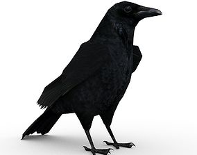 3D asset Carrion Crow Animated
