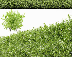 plant 22 3D