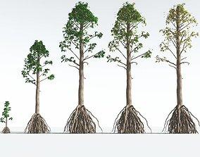 EVERYPlant Common Cordaites EXT --24 Models-- 3D