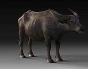 3D model Asian buffalo low poly
