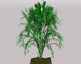 3D model Callistemon Tree