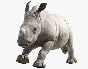 Rhino Baby Animated 3D asset