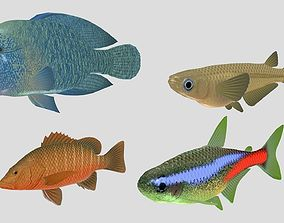 Fish Collection 07 3D model