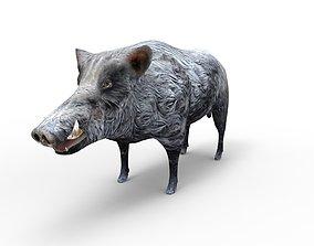 3D Wild Boar 3D Model low-poly