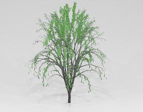 Willow tree 3D model green