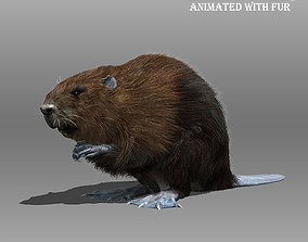 3D Beaver Animated with Fur