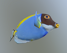 3D model animated Powder Blue Tang