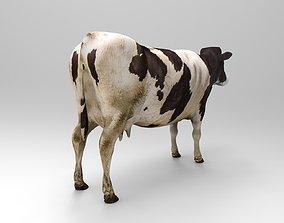3D model Black White Cow