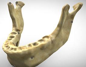3D model Human Jaw Skeleton