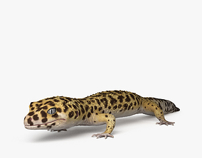 Common Leopard Gecko HD 3D model