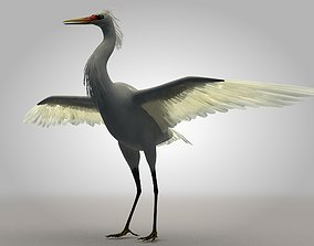 Egretta eulophotes Egret Bird 3D asset