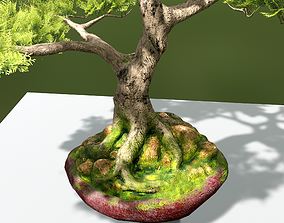 3D model realtime PBR Bonsai Tree