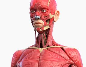3D model Full Body Muscle Anatomy
