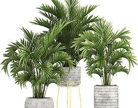 Howea Palms 3D