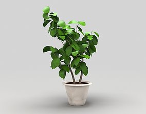Plant 3D model low-poly houseplant