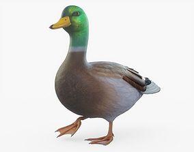 3D asset Duck Rigged