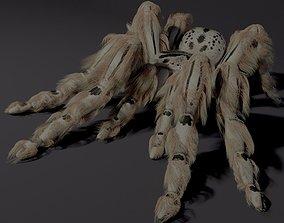 Evil white spider 3D model rigged