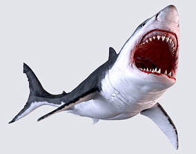 animals White Shark 3D model