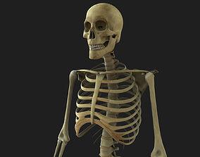 Skeleton Rigged 3D