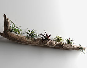 3D model Driftwood with Plants