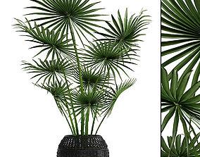 plant Palm tree 3D model