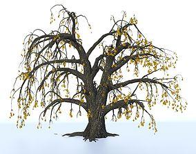 Old oak winter 3D