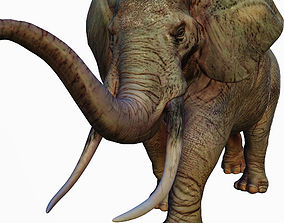 3D model vray Realistic African Elephant