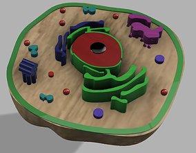 Animal cell nucleoplasm 3D model