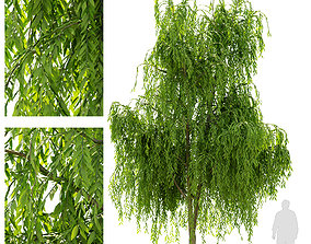 3D Weeping willow tree plant