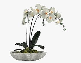 3D model Pot Plant 24