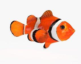 Clown Fish 3D model sculpt
