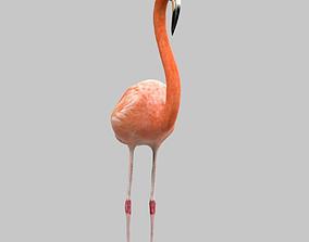 3D asset Flamingo