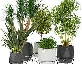3D model Collection plant vol 229