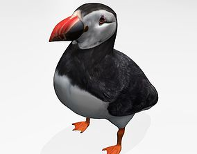 3D model puffin