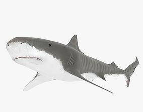 3D asset Tiger Shark