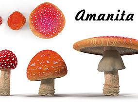 Amanita 3D model