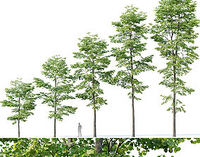 Tilia europaea Nr 8 H7-19m Five forest trees 3D model