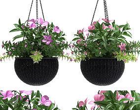 plant hanging basket 3D model