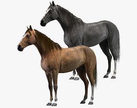 model Horses 3D
